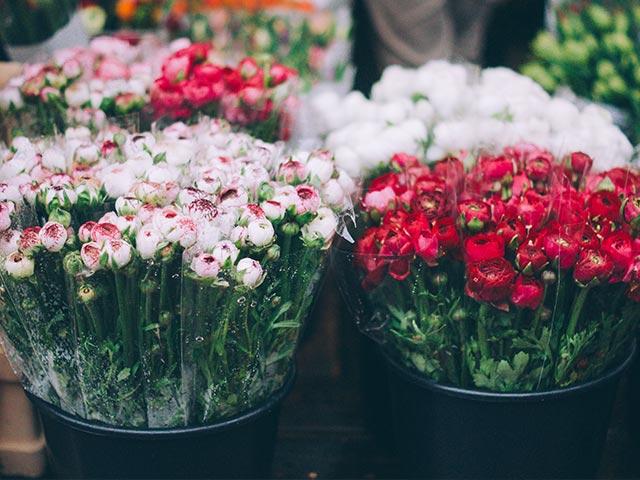bloemen sierteelt